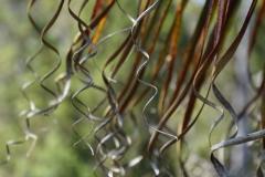 tasmanien 402 copyright piotr nogal