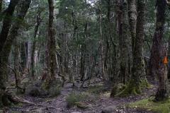 tasmanien 418 copyright piotr nogal