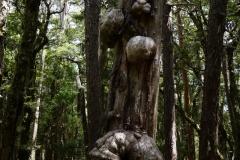 tasmanien 419 copyright piotr nogal