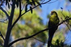 tasmanien 424 copyright piotr nogal