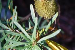 tasmanien 425 copyright piotr nogal