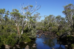 tasmanien 436 copyright piotr nogal
