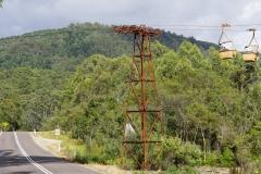 tasmanien 446 copyright piotr nogal