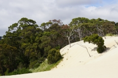tasmanien 489 copyright piotr nogal