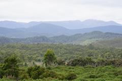 tasmanien 491 copyright piotr nogal