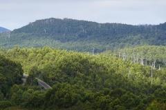 tasmanien 494 copyright piotr nogal