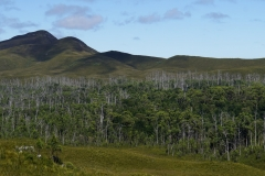 tasmanien 507 copyright piotr nogal