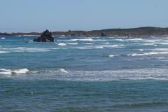 tasmanien 522 copyright piotr nogal