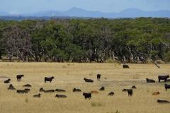 tasmanien 525 copyright piotr nogal
