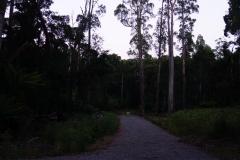 tasmanien 531 copyright piotr nogal