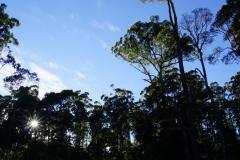 tasmanien 533 copyright piotr nogal