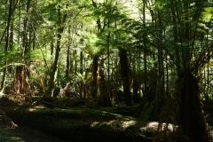 tasmanien 534 copyright piotr nogal
