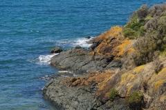 tasmanien 549 copyright piotr nogal