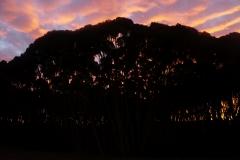 tasmanien 564 copyright piotr nogal